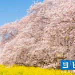 熊谷の予備校2020年人気13選!大学受験塾の評判・口コミランキング