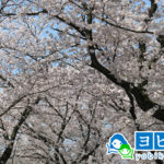 松戸駅の予備校2020年人気13選!大学受験塾の評判・口コミランキング