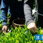 藤枝の予備校2021年人気15選!大学受験の塾探し評判・口コミ