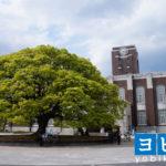 京都大学の評判は?大学や各学部の特徴と偏差値をご紹介