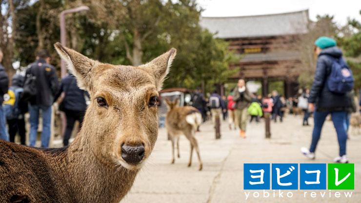奈良県,鹿