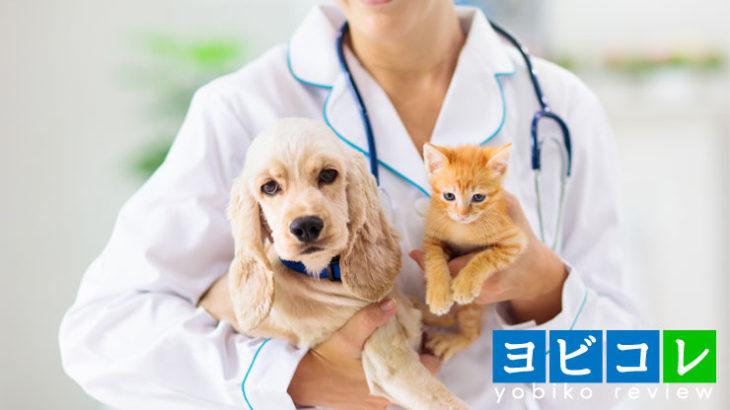 獣医学部と医学部の違いとは?将来のキャリア形成は大きく異なる?