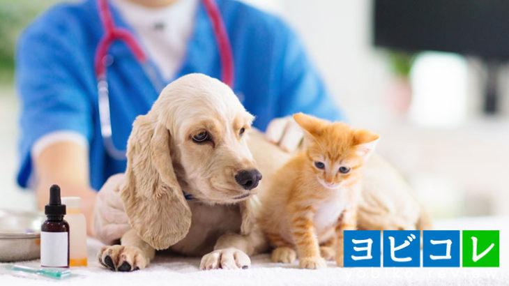獣医学部とは?設置大学と偏差値、入試内容、大学で学ぶこと