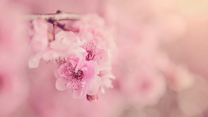 リアルドラゴン桜が実現できる塾・予備校